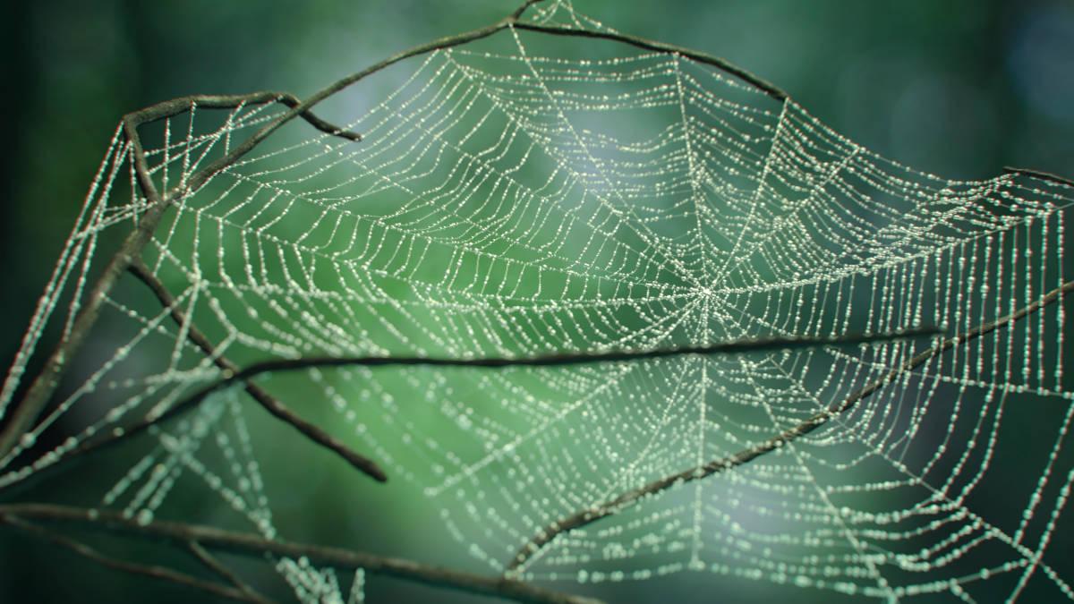 Cobwebs - 3ds Max скрипт за създаване на паяжини