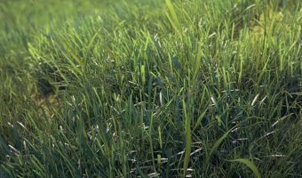 Photorealistic Grass – New Video Tutorial From Viz-People